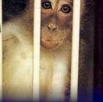 monkeycage